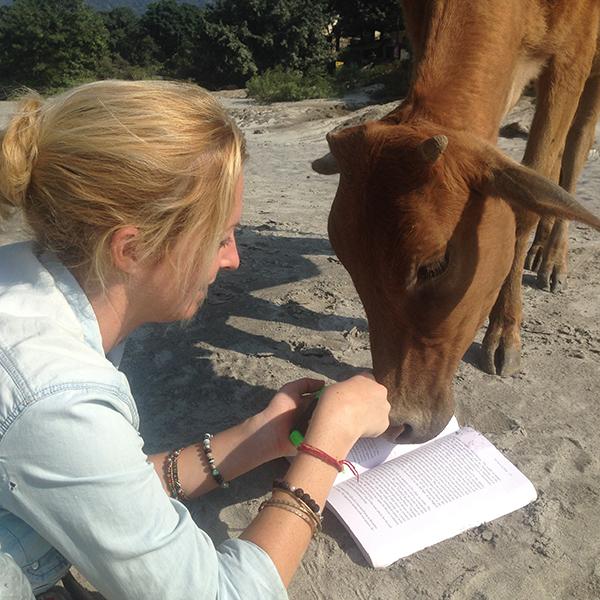 holy-cow-eating-homework